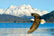 Travel Consultants for Alaska